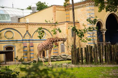 The Giraffe House in the Zoological Garden in Berlin Germany