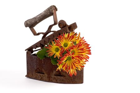 flowers planted in iron