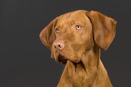 dog portrait on dark background