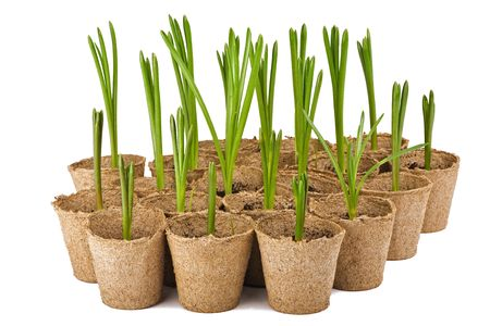 spring seedlings isolated on white background