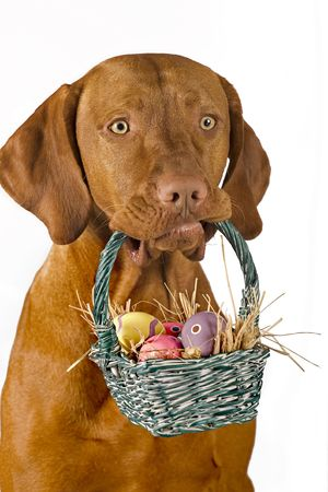 dog holding easter basket with eggs isolated on white background