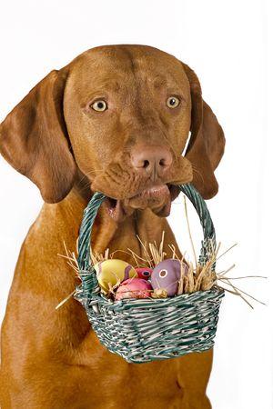 basket: dog holding easter basket with eggs isolated on white background