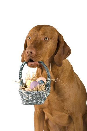 dog holding basket filled with Easter eggs