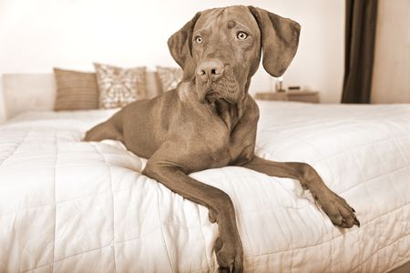 dog resting on bed