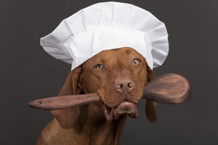 vizsla dog with chef hat and holding wooden spoon