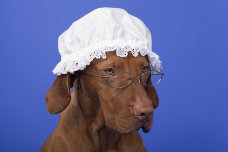 dog with garandma night cap and glasses on blue background Stock Photo