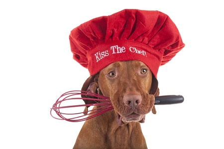 dog posing as a Christmas chef on white background