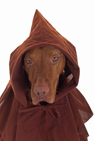 dog wearing medieval monk costume on white background