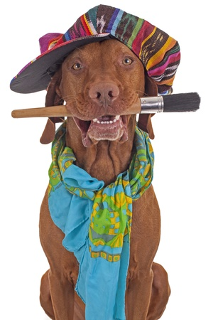 dog with colorfull  hat and scarf holding a paintbrush in  mouth on white background Stock Photo