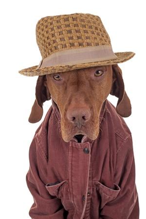 dog wearing cuorduay jacket and hat on white background Stock Photo