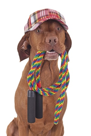dog with colorful baseball hat holding a skipping rope in mouth on white background Stock Photo
