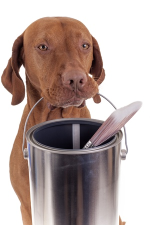 dog holding paint can and brush on white background photo