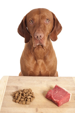 dog making a decision over kibbles versus raw diet  Stock Photo