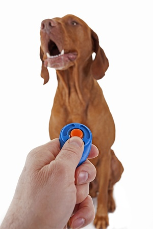 dog obedience training with clicker on white background