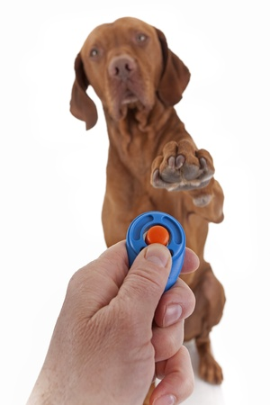 human hand holding clicker with a dog in the backgroung holding paw obediently  in air on white background