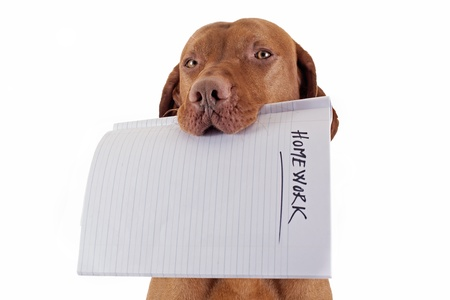 dog school: dog holding homework in mouth on white background Stock Photo