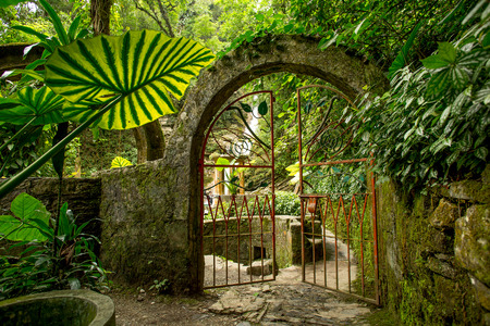 iron gate slightly opn on a jungle path in Las Pozas 스톡 콘텐츠