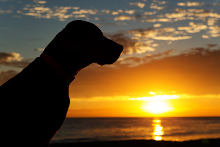 silhouette of a dogs head with the sun rising from the sea in the background 스톡 콘텐츠