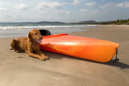Perro, por la besid kayak de mar en la playa Foto de archivo - 31655039