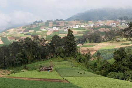 fertile land: fertile volcanic land in guatemala