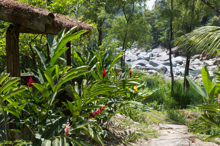 lush tropical vegetation in Pico Bonito national park Honduras, with the Cangrejal river in the background Stock fotó