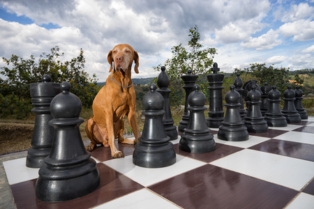 dog sitting on chess board outdoors
