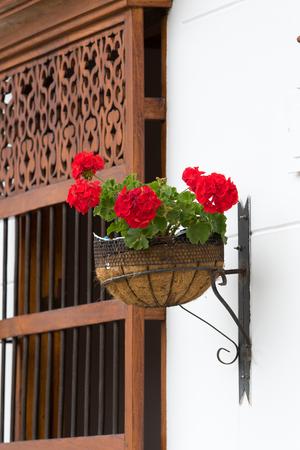 geranium in planter in Colombia