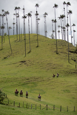 wax palms in the Cocora Valley by Salento Colombia Stock Photo