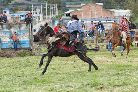 June 3, 2017 Machachi, Ecuador: cowboy in traditional poncho and chaps on horseback holding leather lasso in hand