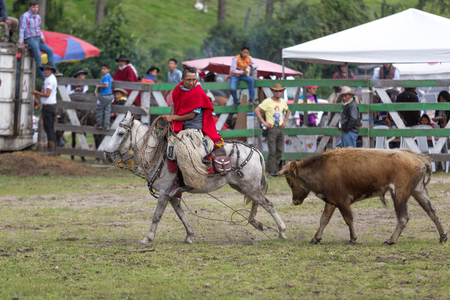 May 27, 2017 Sangolqui, Ecuador: cowboy on horse back chased by bull in a rural rodeo Editorial