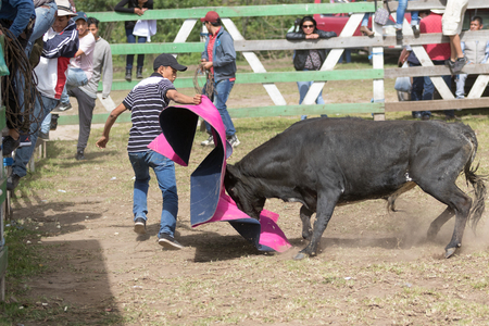 May 28, 2017 Sangolqui, Ecuador: man holding up a cape charged by a bull at a rural amateur bullfight in the Andes Sajtókép