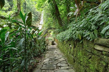 cobblestone path through the jungle