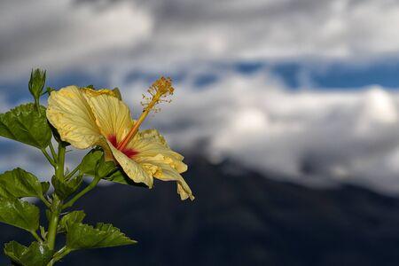 tropical flower closeup in Ecuador Фото со стока
