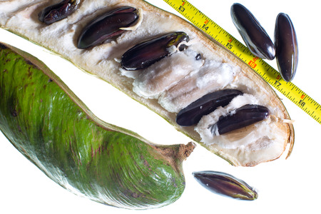 Amazonian inga edulis also known as ice cream beans on white background with imperial measuring tape for size reference