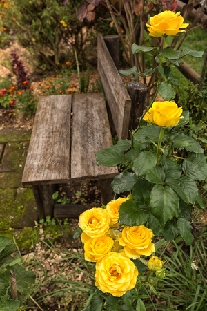 rustic wooden bench in garden