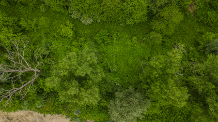 Coniferous and deciduous trees, forest road. Beautiful panoramic footage over the tops of pine forest.