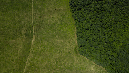 Green landscape with forest and meadowv - top down aerial view