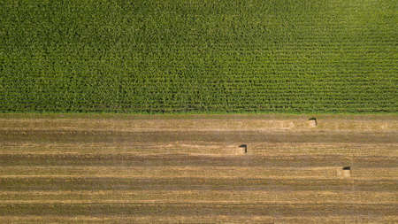 Aerial view: flying over the green cornfield and haystacks Stok Fotoğraf