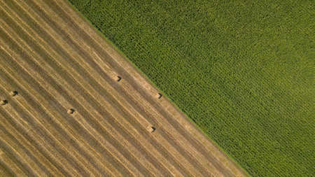 Top down view: flying over the green cornfield and haystacks Stok Fotoğraf