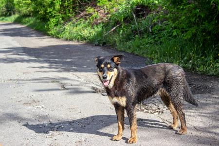 wet homeless dog