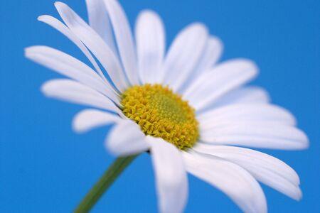 breakable: daisy on blue