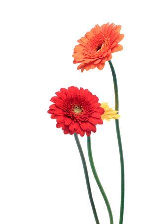 sociable: arancione e giallo Gerbera fiori Archivio Fotografico