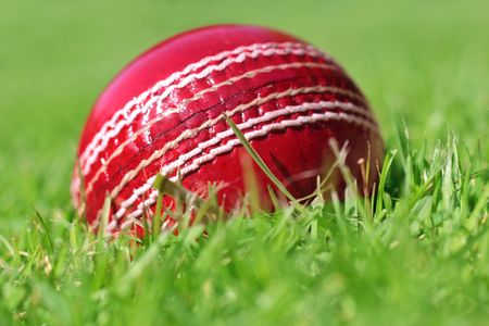 cricket ball: cricket ball on the grass