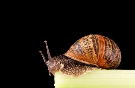 eyespot: snail at the end of a stick of celery
