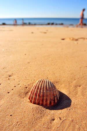 bathers: seashell su una spiaggia Archivio Fotografico