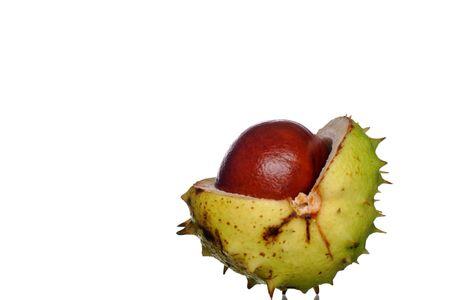 chestnut tree: conker from horse chestnut tree Stock Photo