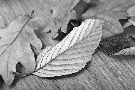 otoño de las hojas en blanco y negro Foto de archivo - 662753