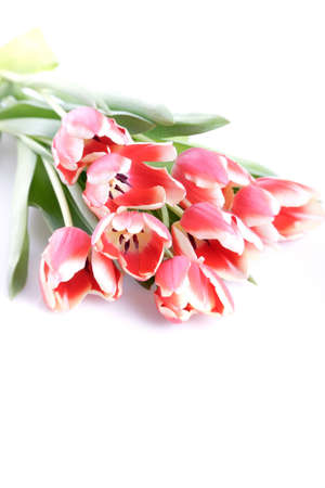 highkey: spring tulip bouquet with highkey effect Stock Photo