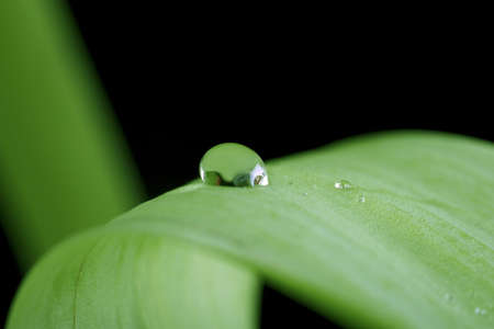 april showers: dew drop on a blade of grass