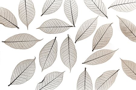 sepia colored skelton leaves Stock Photo